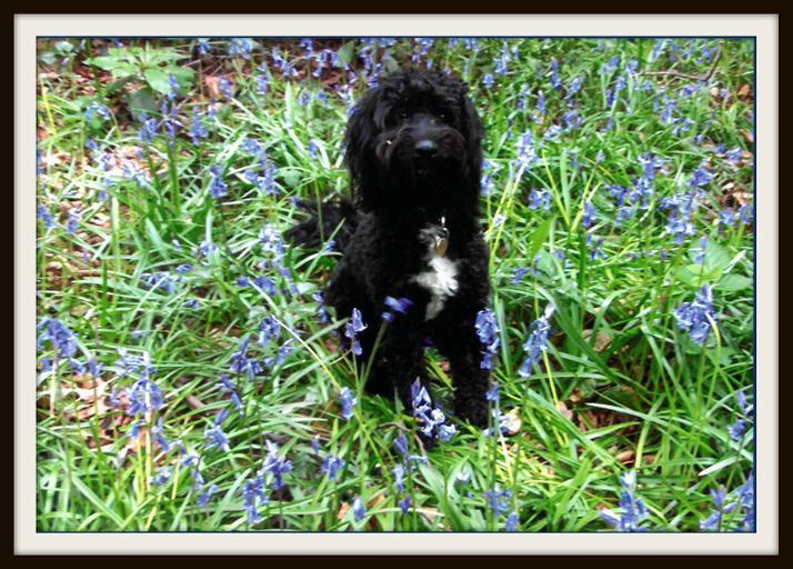 Maya, Deer: My dog Medo in Beckenham Place Park