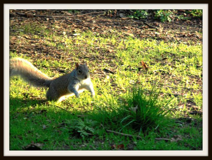 Jack, Deer: Happy Squirrel!