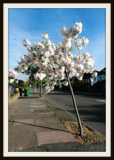 Audrey, Hedgehogs: Beautiful blossom