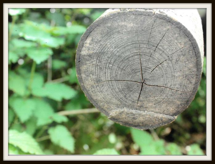 Nate, Otter: Log with rings like ripples in a pond