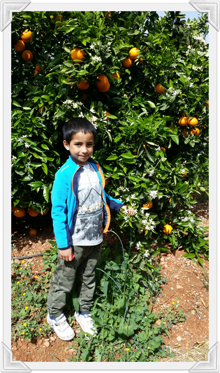 Oliver from Owl Class in an orange field in Spain