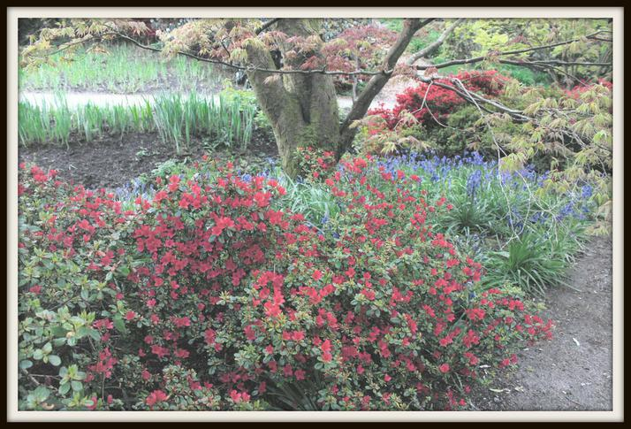 Lily, Deer: Colours in Wakehurst