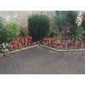 Our very own poppy display!
