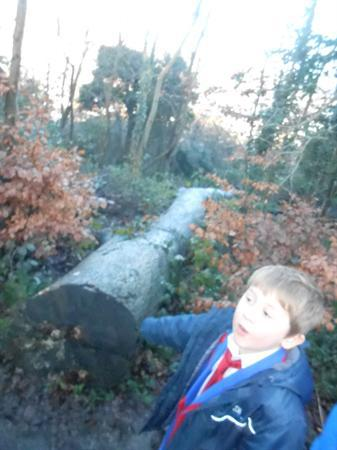 Natural Sculpture Trail