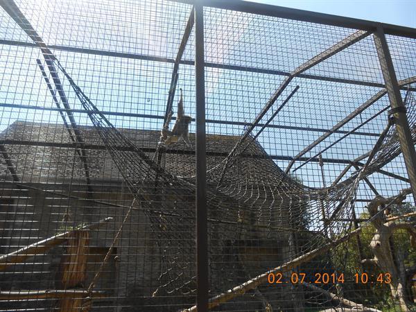 Cotswold Wildlife Park