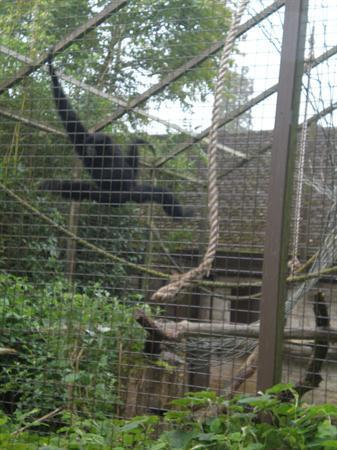 Cotswold Wildlife Park School Trip