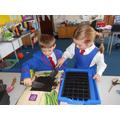Planting Rocket Seeds