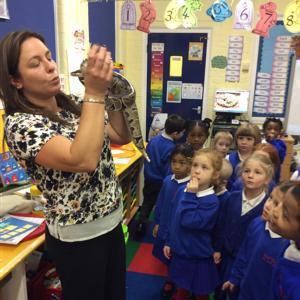Mrs Goodliff's Royal Python No Feet came to visit