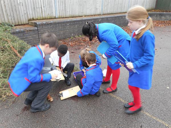Measuring in cm and mm