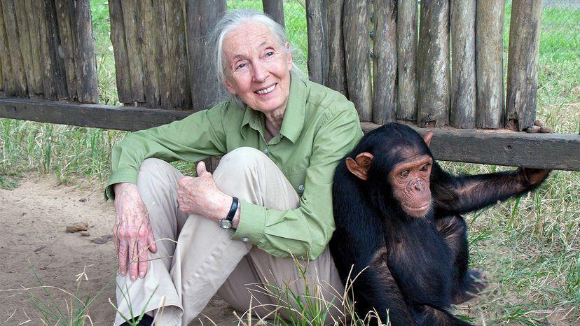 Jane Goodall, smiling, sitting on the ground with a chimpanzee leaning against her.