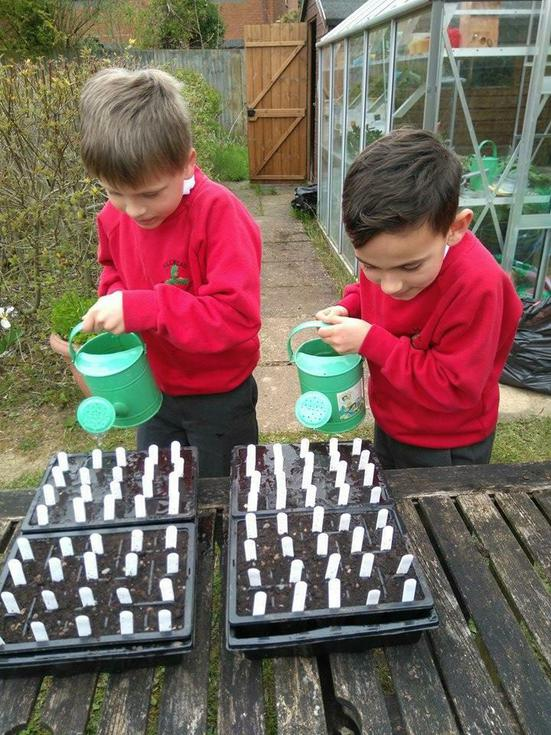 Looking after the rocket seeds