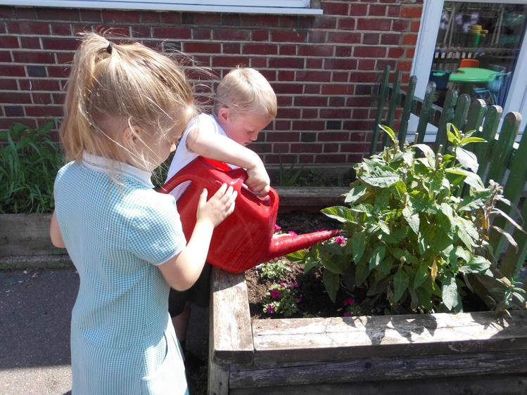 We have been watering them lots during the hot weather.