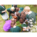 We did some pond dipping. Do you want to see what we found?
