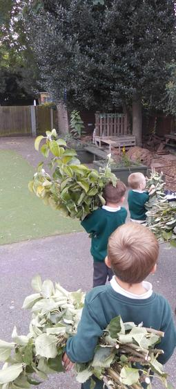 We used the leaves to