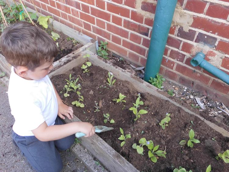 We have got lots to plant.