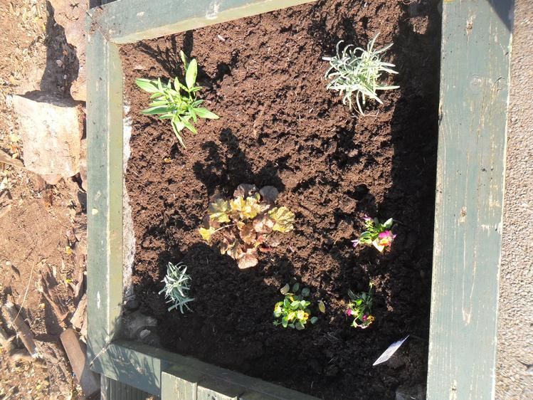 We have been planting spring