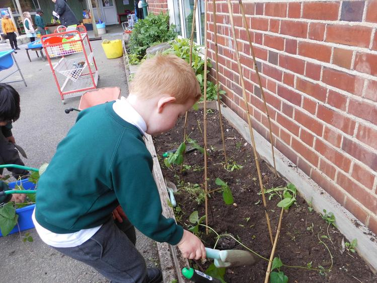 that we have planted them in the garden.