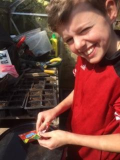 W planting sunflower seeds