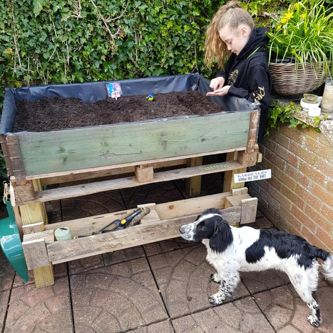 P's very own veg bed