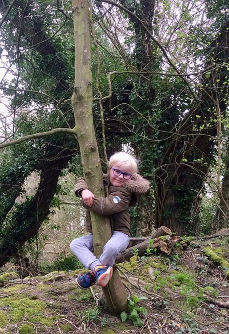 R climbing a tree