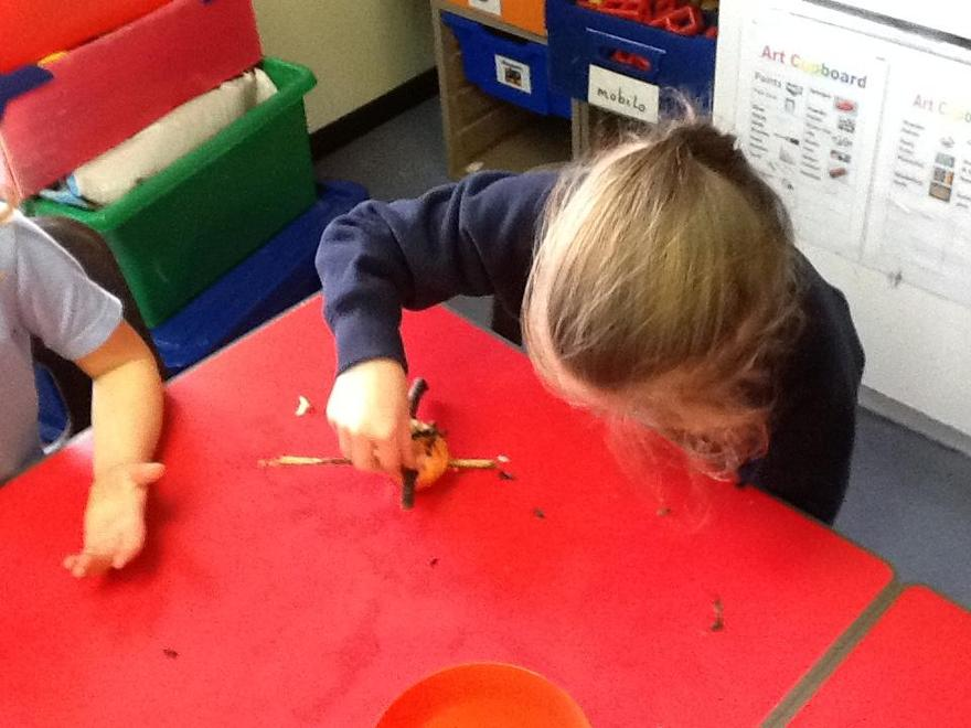 Investigating bird feeders