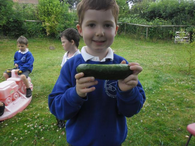 Look what we grew - delicious cucumbers!!