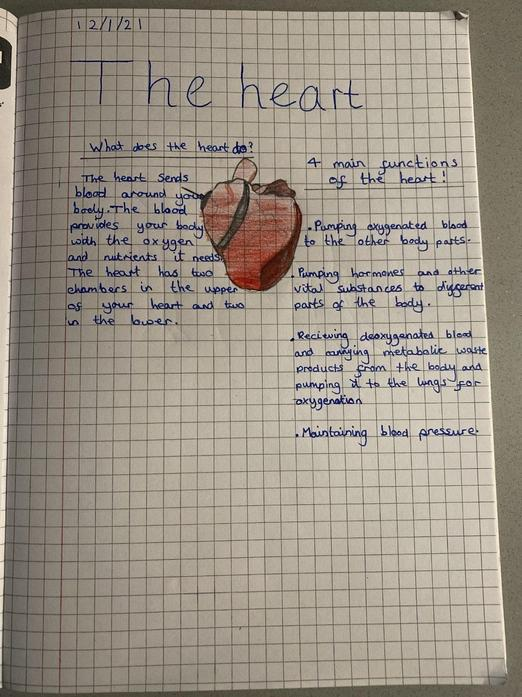 Beau's Science Work - The Heart
