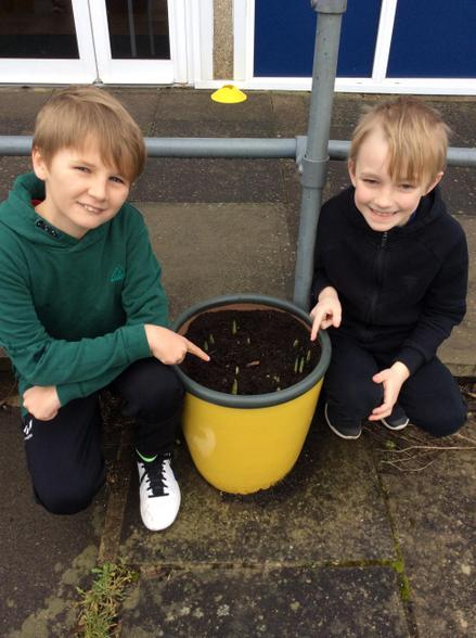 We checked on the progress of our bulbs.