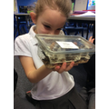 Observing crickets