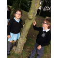 What trees are in our woodland area?