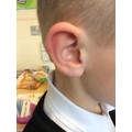 Are our ears the same or different?