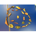 Circles of leaves