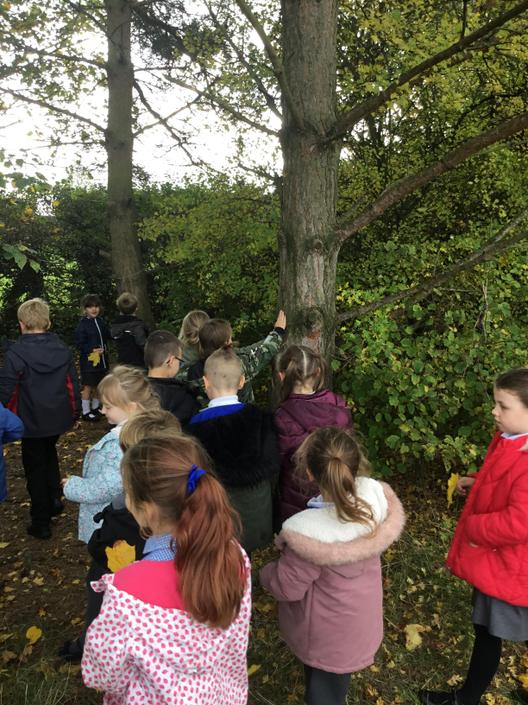 Science- Closely observing trees