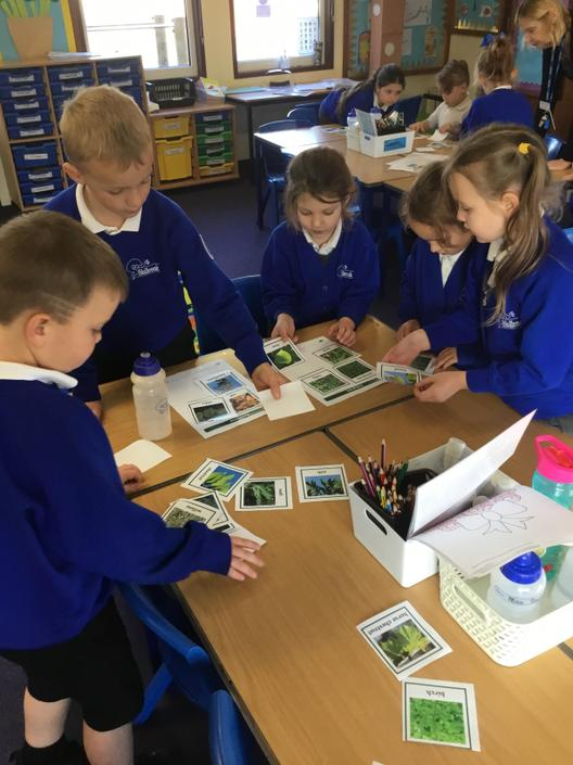 Science- Sorting Trees
