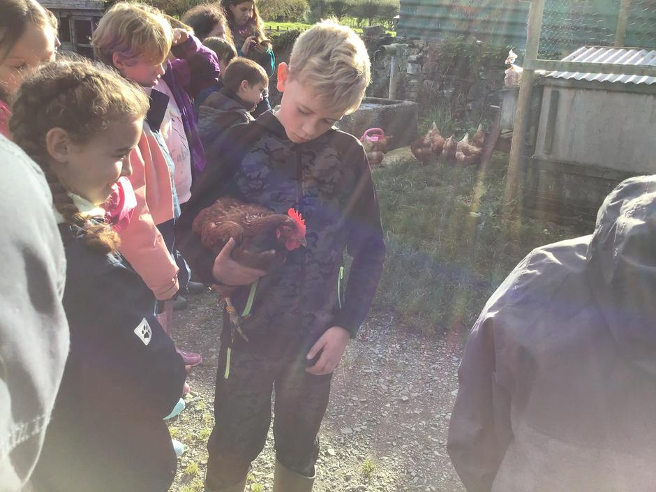 We looked after chickens