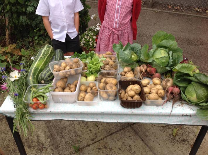 Year 2 had lots of fun sharing out our veg