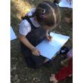 Sketching trees