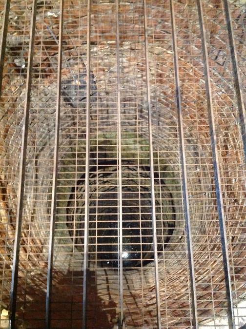 A deep well next to the vaults.