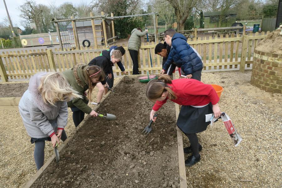Preparing the soil for our own school farm