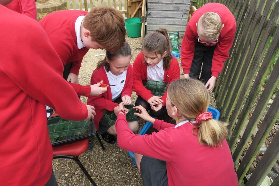 Taking cuttings - sustainability