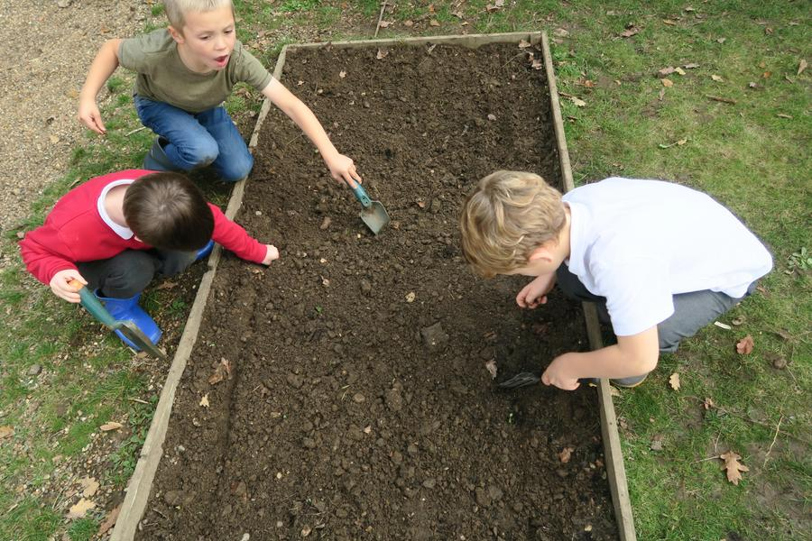 planting garlic bulbs