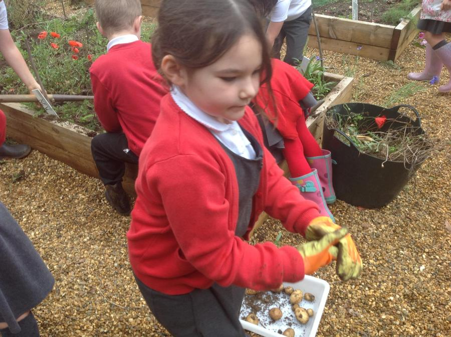 Our young gardeners are keen to get stuck in!