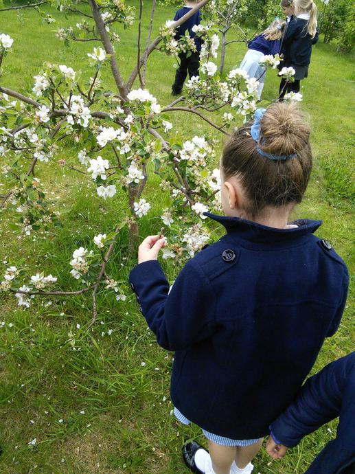 Looking for signs of spring around school!