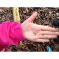 Emily found centipedes.