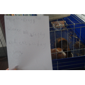 CC#6 - Rexy & Ginger - Riyad's pets!
