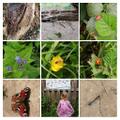 CC#28 - Nieve's bug hunt!
