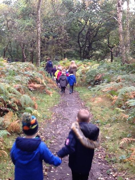 Great walks in the woods