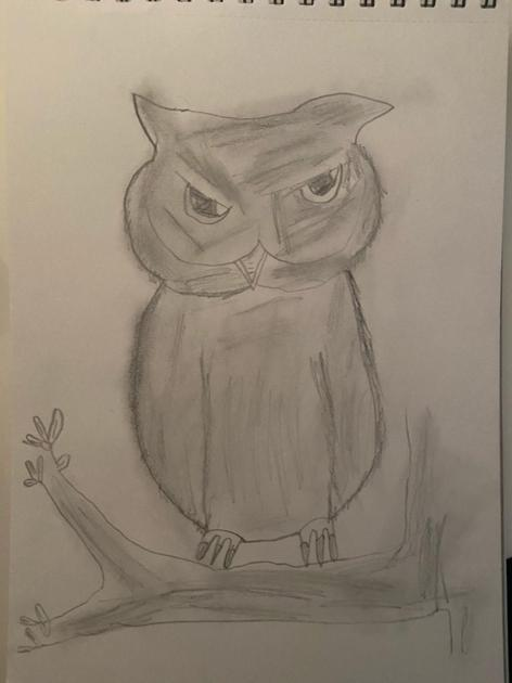 and an owl