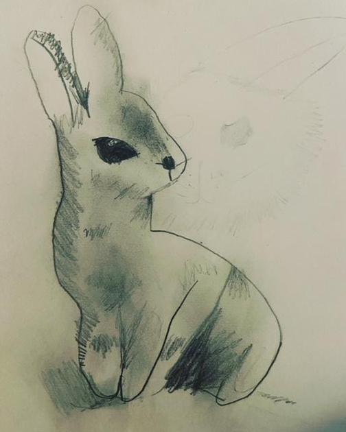 Sophia has been drawing a rabbit