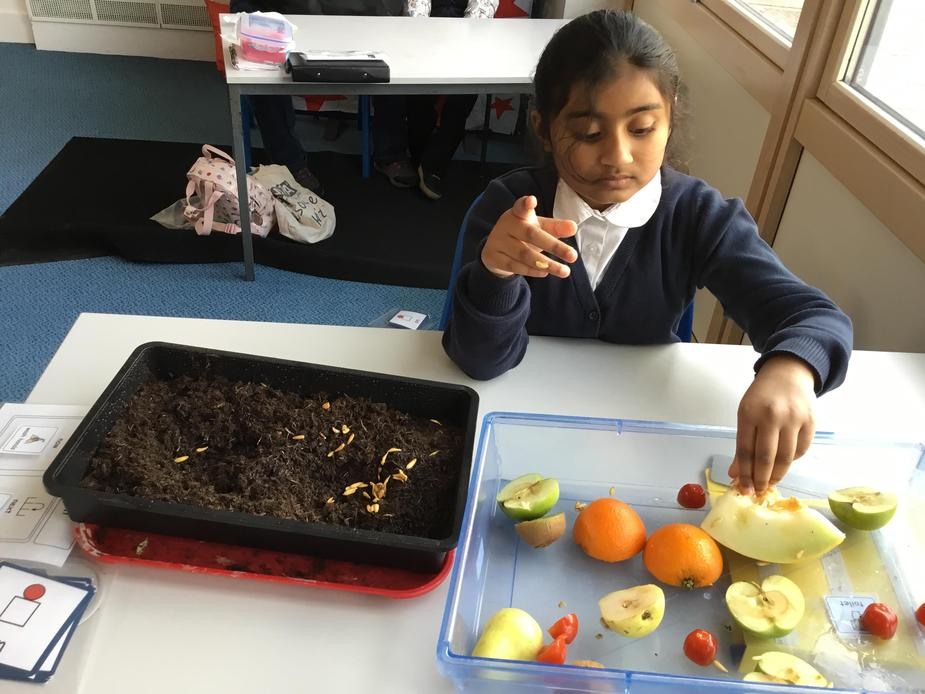 exploring fruit and vegetables